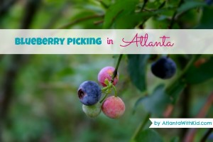 Blueberry picking in Atlanta
